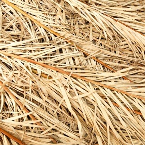 dry palm straw